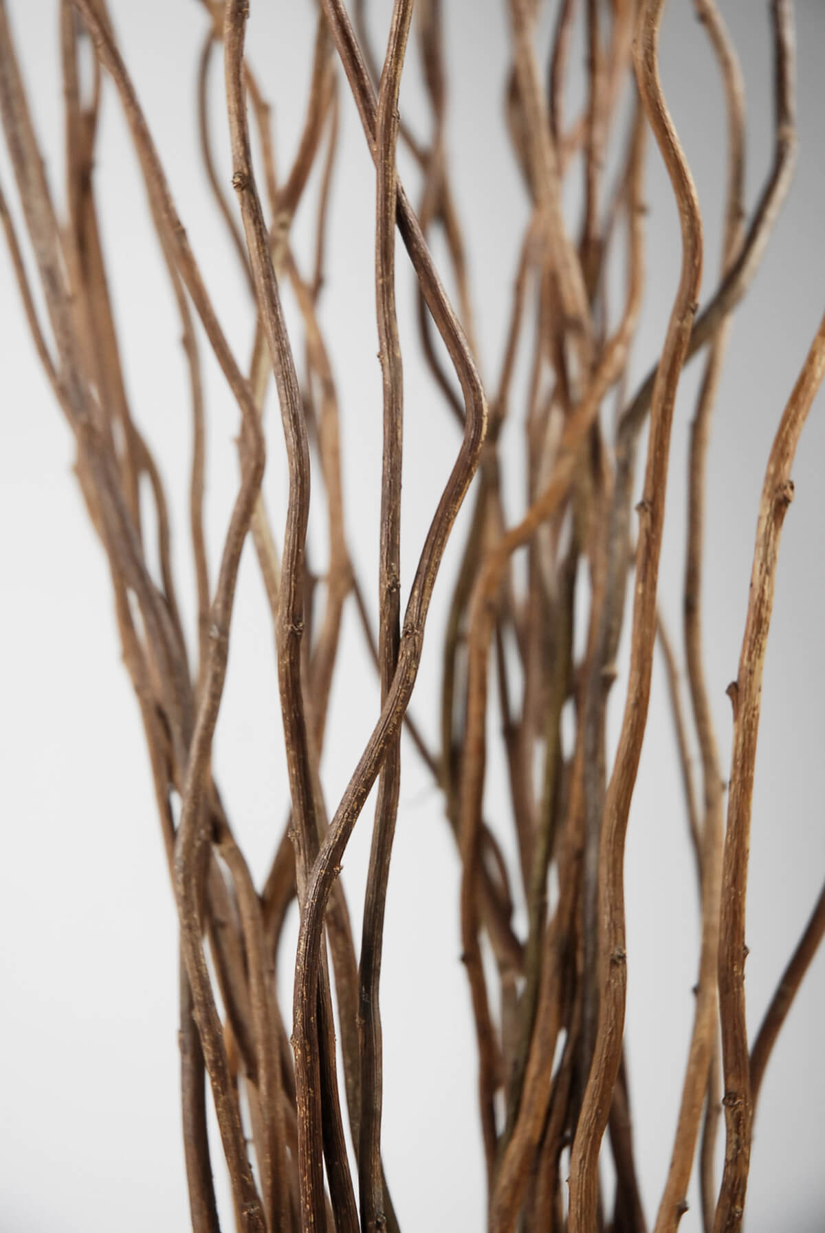 Natural Curly Willow Branches 36-40in (11 branch bundle)