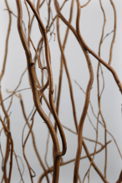 Natural Curly Willow Branches, 12 Branches,  3-4 Feet