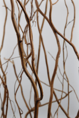 Natural Curly Willow Branches 3-4ft (12 Branches)