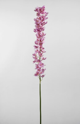 Cymbidium Orchid Stem Pink 53in
