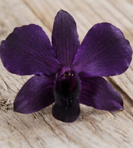 Preserved Orchids Deep Purple (30 Flowers)