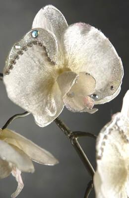 Diamond White 32in Phaleanopsis Orchid Stem