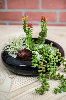 "Round Ceramic Shallow Planter Dish, Black 9"""