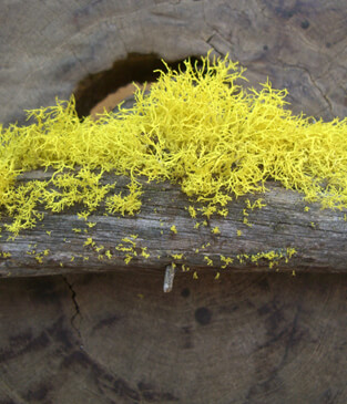 DIY: Applying Reindeer Moss to branches