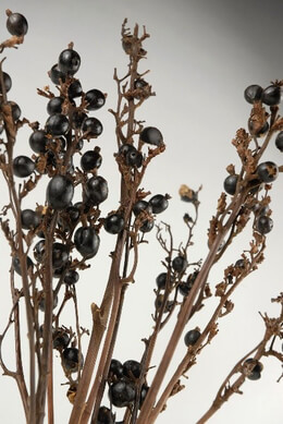 Dried Berry Branches Black 20in