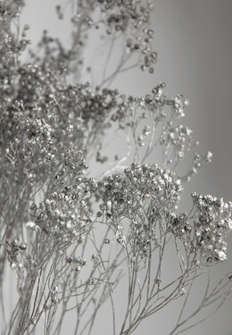 Dried Broom Bloom Silver (20 branches)