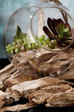 "Small Driftwood, 1lb. Vase & Terrarium Filler, 3-4"" long"