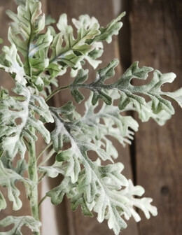 "Dusty Miller 19"" Artificial (12 Stems)"