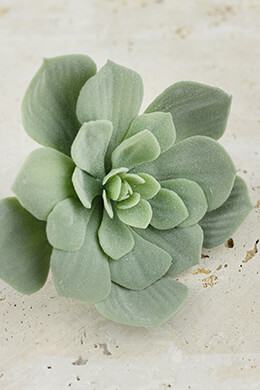 Echeveria Pick Frosted Green 7x4.5in