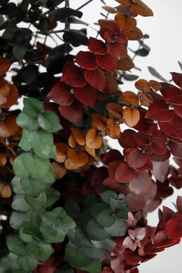 Tri Color Eucalyptus Stems 12 Oz Bundle