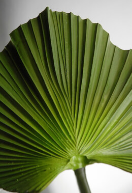 Fan Palm Leaves Natural Touch Green 32 in.