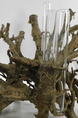 Faux Driftwood Branch 12x9 Centerpiece with 8 glass vials