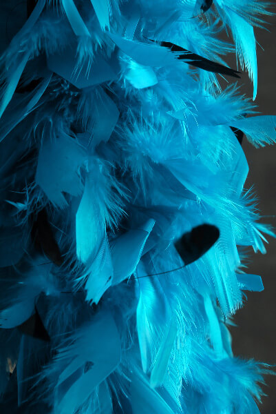 "Feather Boas Turquoise Blue with Black Coque Feathers Chandelle 80 gram (9"" wide)"