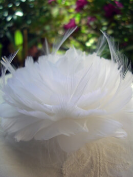 Feather Flower Gardenia
