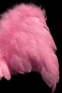 Feather Wings 21x15 Candy Pink Marabou & Goose Feathers