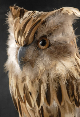 "Feathered Owls 14"" Brown Barn Owl"
