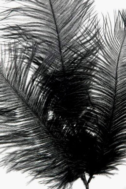 Ostrich Feathers Black Wired (3 Feathers on Wired Stem)