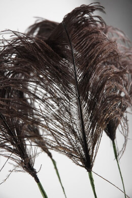 Feathers Brown Ostrich on Wired Stem