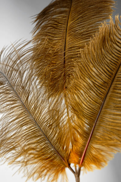 "Feathers Sienna Brown Ostrich Feathers (3 feathers on each 28"" wire)"