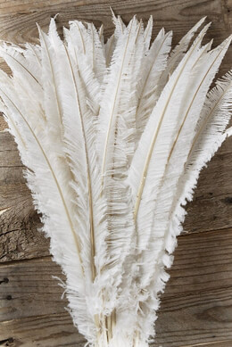 Feathers White Ostrich Nandu Feathers (1/2 lb - 70 feathers )