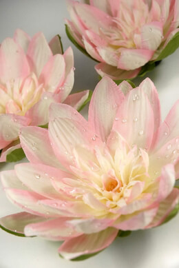 "Floating Flowers 7"" Pink & White Water Lilies Silk (12 flowers)"