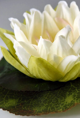 Floating Water Lily Cream Flowers 6.5 Inch