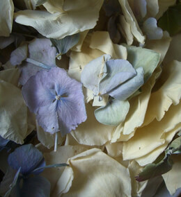 Ivory Rose and Blue and Green Hydrangea Petals Freeze Dried (5 cups)