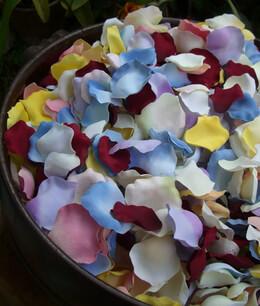 Flower Petals,  Rose Petals,  Orchid Petals