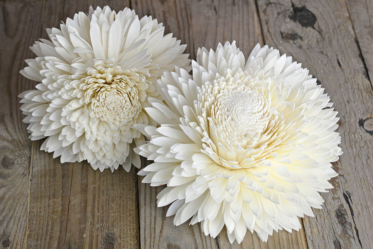 2 Large 8in Sola Zinnia Flowers 20cm Sola Flowers
