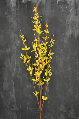Forsythia Flower Yellow 38in