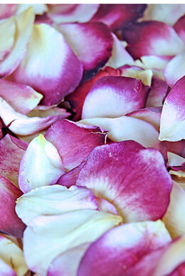 Freeze Dried Rose Petals Blushing Bride (5 cups)