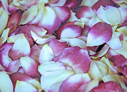 Blush Bride Freeze Dried Rose Petals (5 cups)