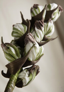 Fritillaria Green and White Natural Touch Flowers