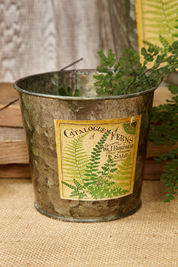 Galvanized Bucket Fern 4.5x4in
