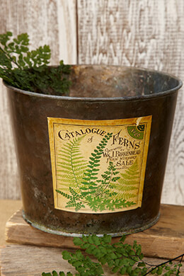 Galvanized Bucket Fern 6.5X5in