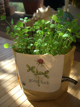 Garden In Bag Good Luck Clover Growing Kit