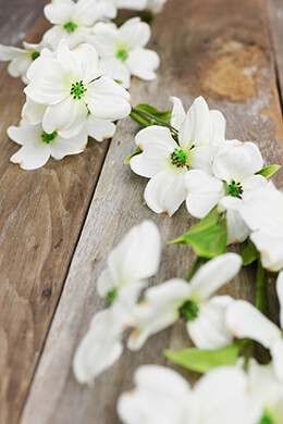 White Dogwood Flower 6 Foot Garland