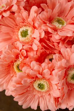 "24 Peach Gerbera Daisy Flowers 9"""