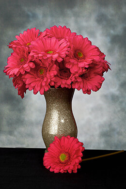 Gerbera Daisy Stem Pink Beauty 9in (Pack of 24)