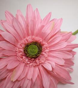 Gerbera Daisies Pink Silk Flowers