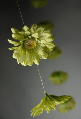 Gerbera Daisy Garlands (18 flowers) 6 ft Lime Green