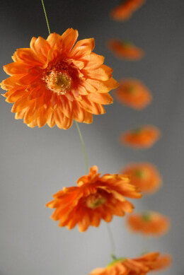 Gerbera Daisy Garland Orange 6ft