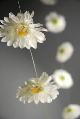 Gerbera Daisy Garland White 6ft