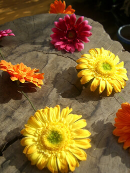 Gerbera Daisy Garland Multicolored 5ft