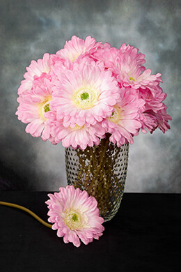 Gerbera Daisy Pink 9in (Pack of 24)
