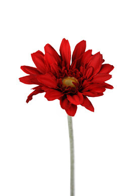 Gerbera Daisy Stem Red 22.5in (Pack of 24)