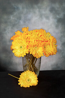 Gerbera Daisy Yellow 9in (Pack of 24)