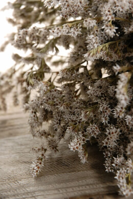 Dried German Statice Flowers 13 x 8""