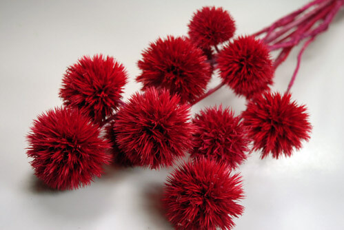 Giant Red Preserved Thistles,  12 Thistles