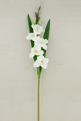 Gladiolus Flower Cream 33in